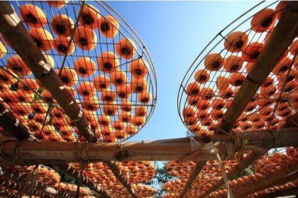 干し柿の白い粉の正体